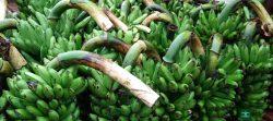 اوگاندا یاقوت سبز